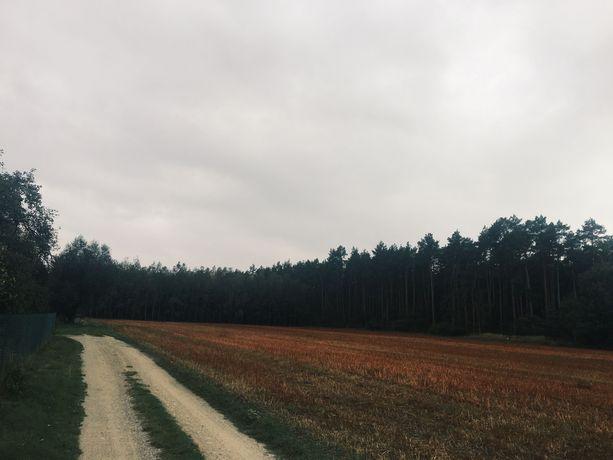 Wydzierżawię działkę 2500m2 pod lasem 10min od Kalisza