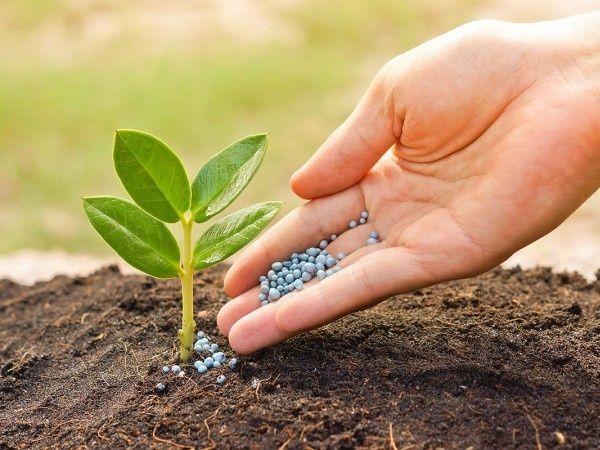 Аммиачная селитра, минеральное удобрение для почвы, фасовка