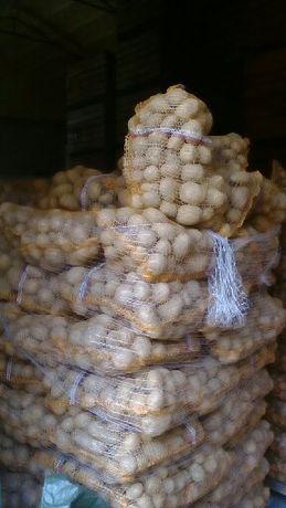 Sprzedam ziemniaki jadalne i paszowe