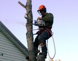 Wycinka Drzew Frezowanie Pni Usuwanie Pni Rębak Ogrod