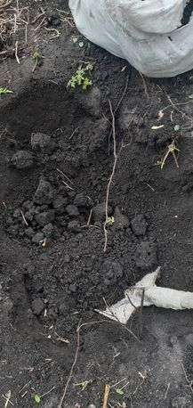 Чернозём рассыпчатый, чистый, плодородный. Доставим перегной навоз