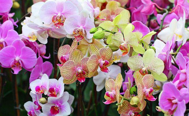 Обменяю на орхидеи