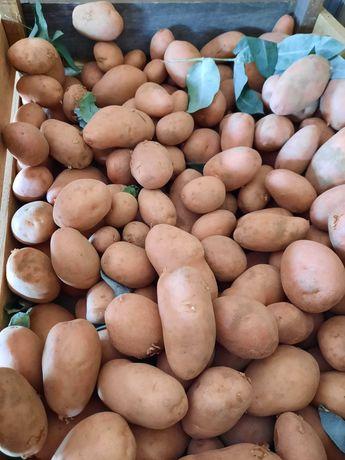 Batatas novas 2021