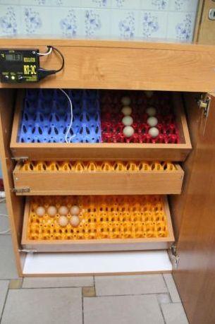NOWY Inkubator 300 jaj AUTOMATYCZNE sterowanie półautomat do kurzych