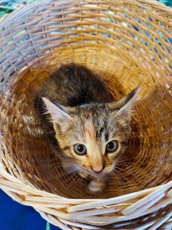 Котенок кошечка кошка
