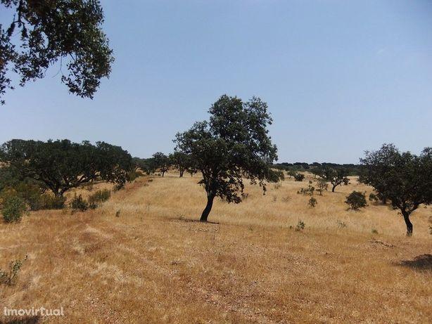 Terreno Rústico no concelho de Ourique