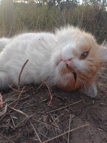 Холеный рыжий котенок