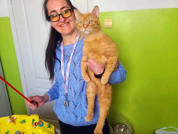Рыженькое чудо, кот Батошик (1 Год)