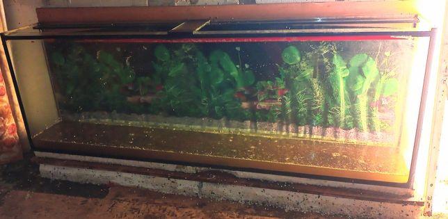 Akwarium robione na zamówienie 420 litrów 2 m x 30 cm x 70 cm