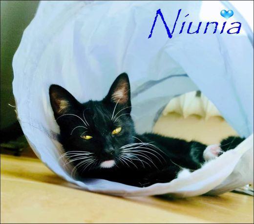 Niunia szuka domu