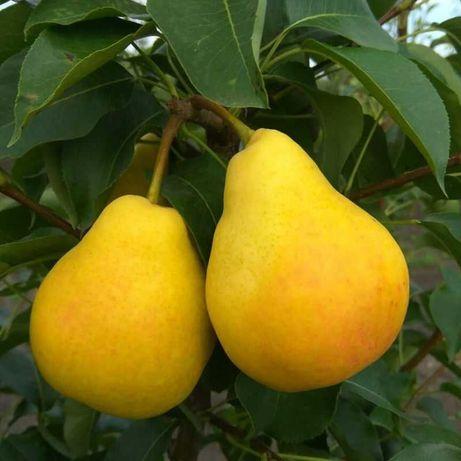 Саженцы плодовых и декоративных растений.
