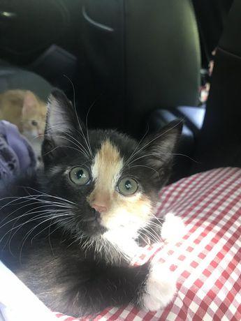 Ніжна кицюня ( котик кішечка кошеня )