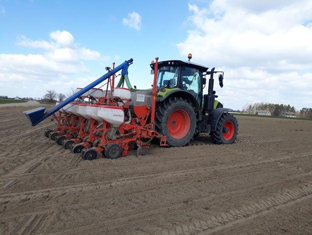 Usługi Rolnicze siew kukurydzy, z GPS do 2 cm.