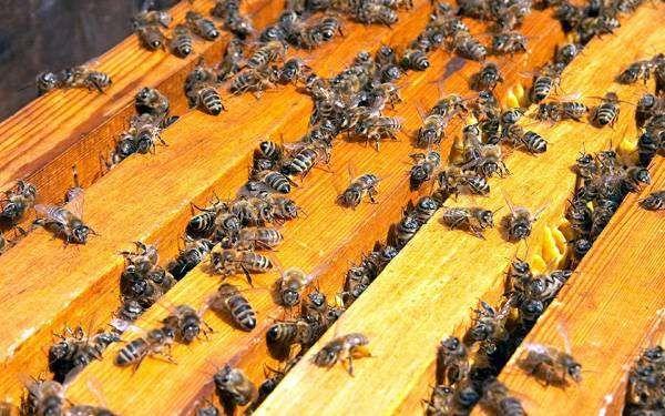 Продам пчел март-апрель
