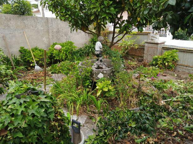 Limpezas de terrenos e manutenção de jardins