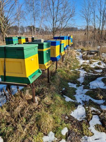 Sprzedam rodziny pszczele