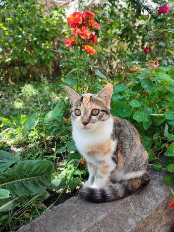 очень добрая и ласковая кошка