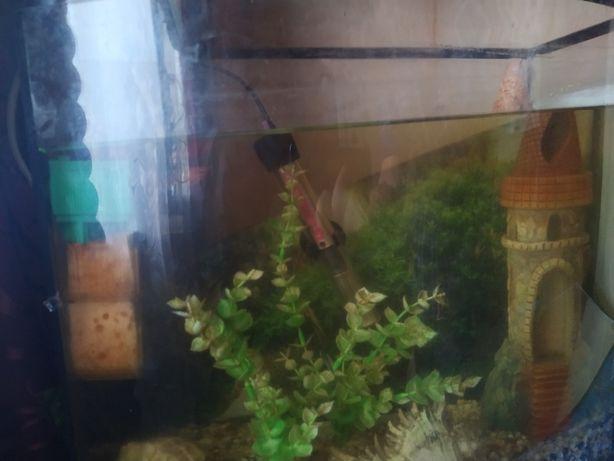 Продам аквариум с рыбками  на 40 литров