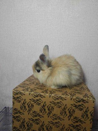 Кролики малютки с подарком декоративные крольчата клетка