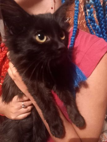 Чёрная кошечка - котёнок!!!
