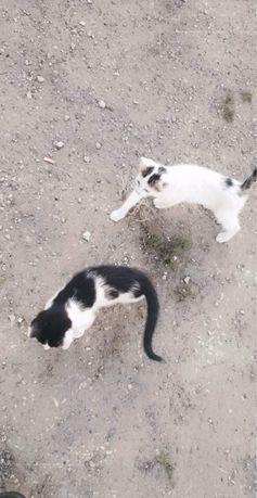 Oddam dwa śliczne koty w dobre ręce !