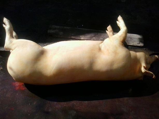 Продам свиннину