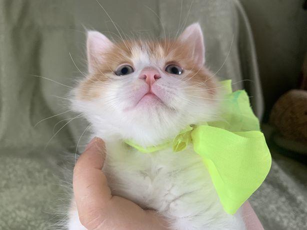 Отдам котенка в добрые ручки
