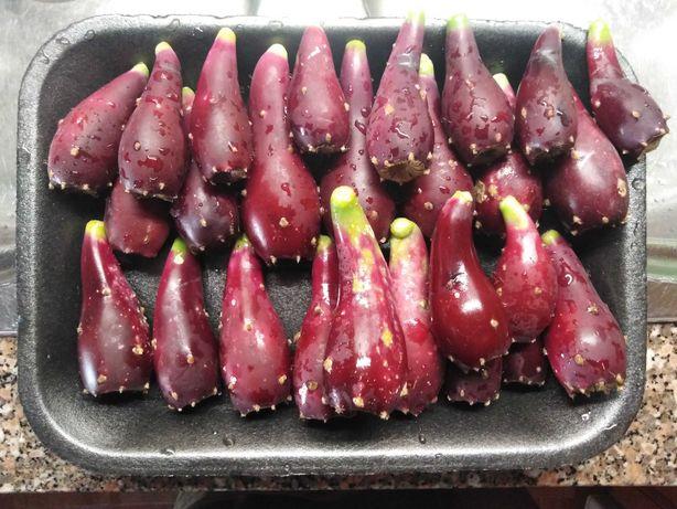 Figos da Índia variedade Opuntia Humifusa