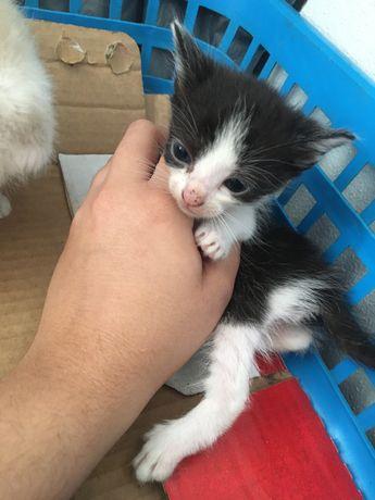 Duas gatinhas  para adocao !!!
