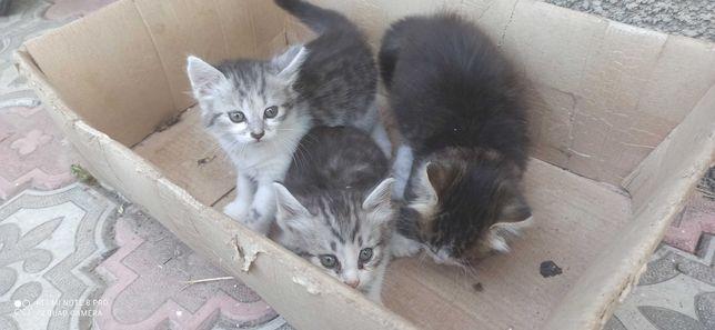 Кошенятка шукають дім