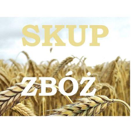 Skup Zbóż:Pszenica,Żyto,Jęczmień,Pszenżyto,kukur.,Mieszanki-Cena Dnia!