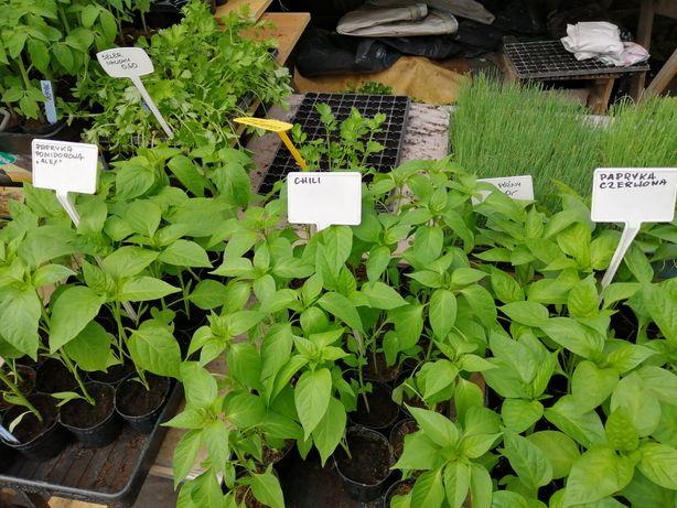 Warzywa i zioła rozsady