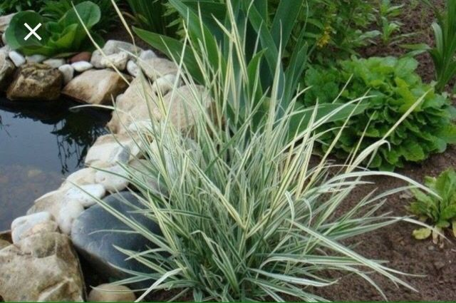 Шёлковая трава