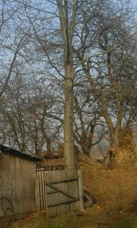 Спил,пилка деревьев,уборка садов