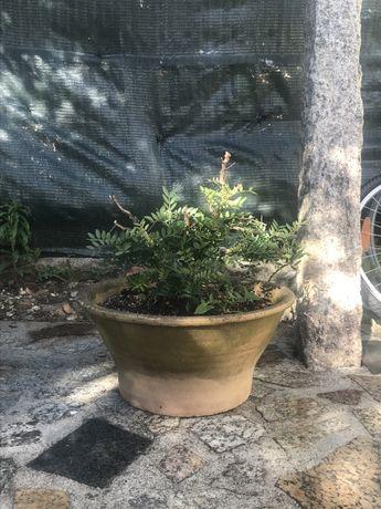 Vaso grande com planta