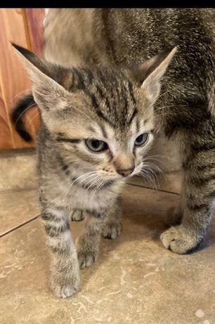 Oddam za darmo małe kotki