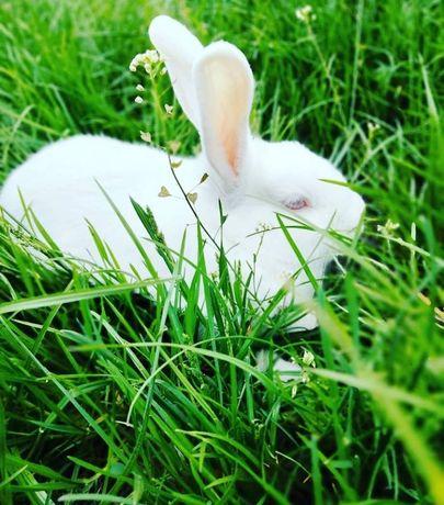 Продам кролика вместе с клеткой и поилкой