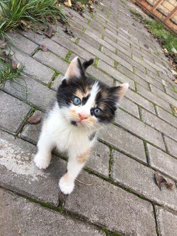 Отдам маленькую кошечку в хорошие руки!