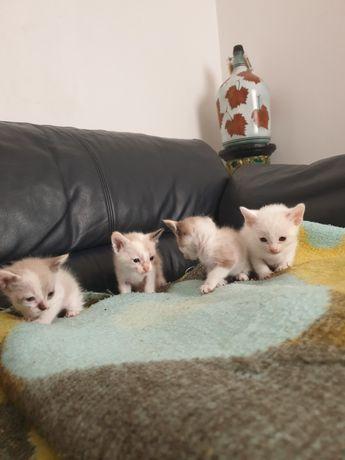 Gatinhos com 1 mês para adoção
