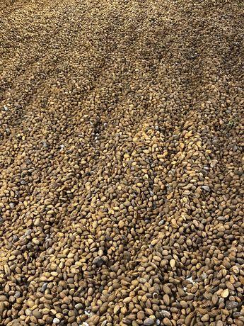 Amendoa da Beira Baixa