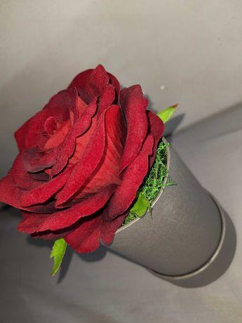 Wieczna róża czerwona