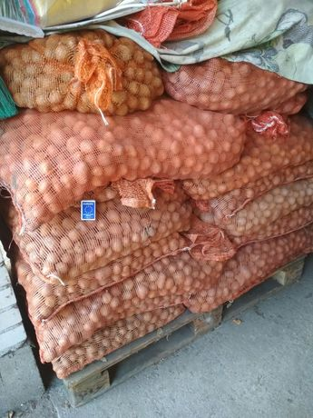 Ziemniaki paszowe, marchew