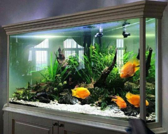 Чистка аквариума,обслуживание.
