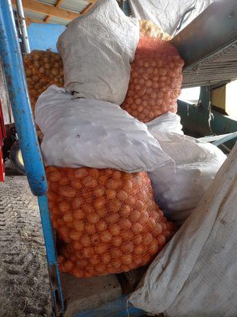 Ziemniaki odpadowe paszowe lulki