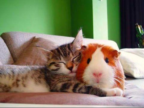 Присмотрю за животными(передержка животных)