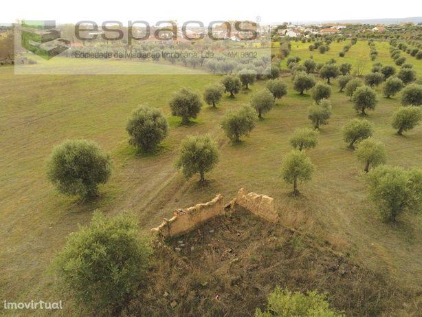 Terreno rústico de regadio com ruina - Ladoeiro