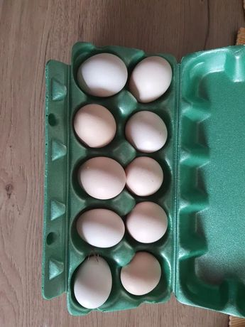 Jajka wiejskie od kurek/ również zielononóżki