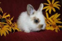 Яркие кролики в продаже с комплектациями