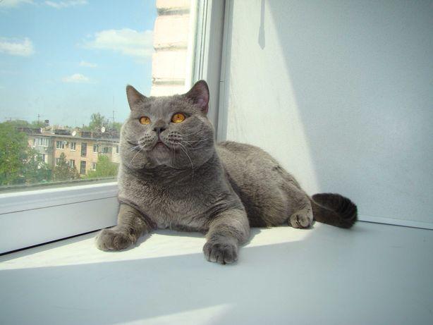 Вязко кошек,страйт и фолд.
