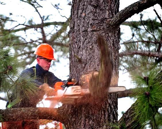 ciecie drzewa wycinka drzew karczowanie dzialek ciecie zywoplotu traw